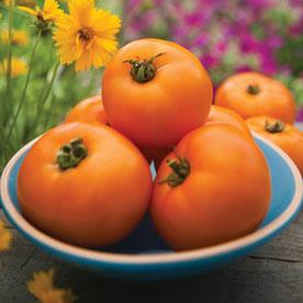 Orange Wellington