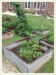 West End Middle School raised beds are thriving