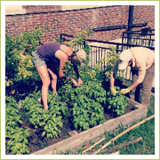Volunteers maintain the gardens and keep them thriving for students over break