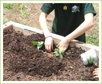 The West End Garden Club loves to DIG!