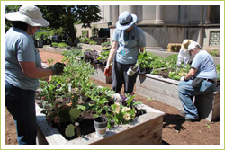 Master Gardeners plant up hundreds of Burpee Home Gardens plants at the Museum of Science and Industry Smart Home