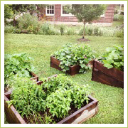 West End Middle School raised beds are full of veggies and learning opportunities